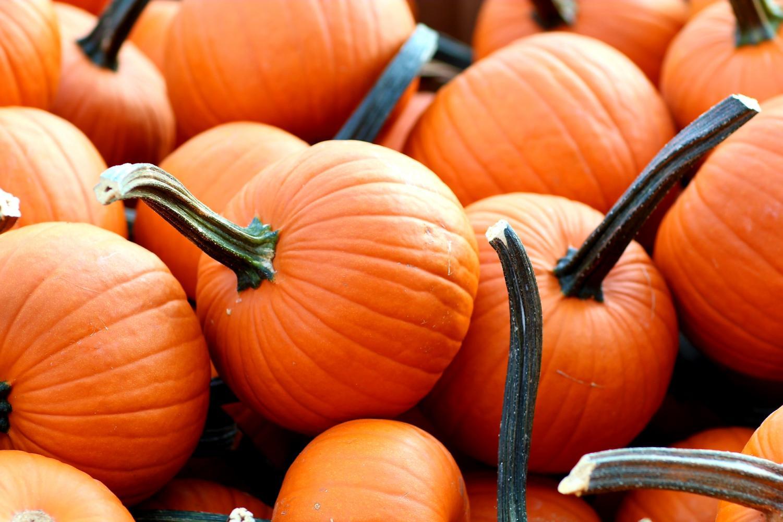 Pumpkins at a pumpkin patch.